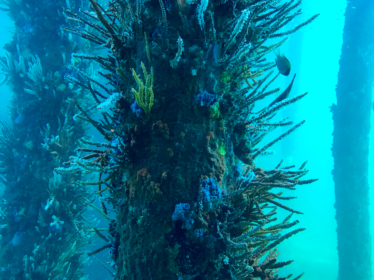 Places to visit in Busselton, Underwater Observatory
